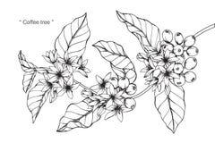 Teckningen för kaffeträdet och skissar Royaltyfri Foto
