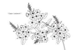 Teckningen för uddeleadwortblomman och skissar Royaltyfri Bild
