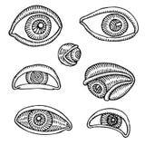 teckningsögon Fotografering för Bildbyråer
