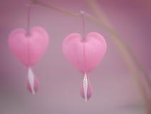 teckningsblommor isolerade verklig valentinwhite Arkivbild