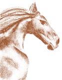 teckningshäst Arkivbild