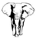 Teckningskontur av en rörande elefant Royaltyfri Fotografi