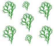 Teckningsträd, grodd royaltyfri illustrationer
