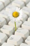 Teclado e flor de computador imagens de stock