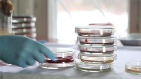 Tecnico che ordina le capsule di Petri in laboratorio medico video d archivio