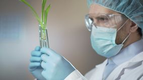 Tecnico di laboratorio cosmetico che esamina con attenzione i campioni prima della presa degli estratti stock footage
