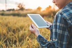 Tecnología agrícola agrícola elegante y agricultura orgánica Wo imágenes de archivo libres de regalías