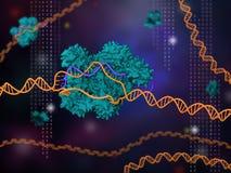 Tecnología CRISPR-Cas9 Imagenes de archivo