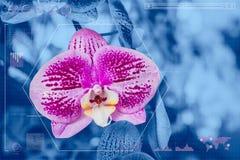 Tecnologías de la información de la botánica Fotos de archivo libres de regalías