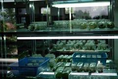 tecnologia da cultura do tecido no laboratório a pilha da planta cresce no nutr foto de stock royalty free