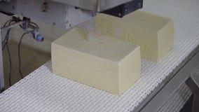 Tecnologia da produ??o de queijo Linha do transporte para o processo de empacotamento do queijo Queijo que processa na f?brica do video estoque