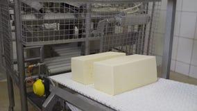Tecnologia da produ??o de queijo Linha do transporte para o processo de empacotamento do queijo Queijo que processa na f?brica do vídeos de arquivo