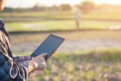 Tecnologia di agricoltura, agricoltore che per mezzo della compressa sul campo di agricoltura Immagini Stock