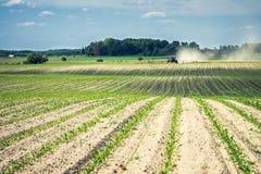 Tecnologia di cereale crescente sulla sabbia sotto il sole scottante Fotografie Stock Libere da Diritti