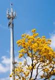 Tecnologia e un albero Fotografia Stock Libera da Diritti