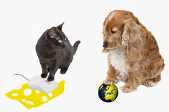Tecnologia moderna e animais de estimação foto de stock