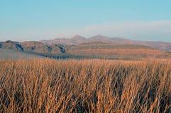 Tecopa Hot Springs Marsh Grass Royaltyfria Bilder