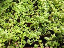 tecture verde Imagem de Stock Royalty Free