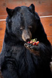 Ted With Snack royaltyfri bild