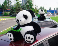 Teddy αρκούδες της Panda Στοκ φωτογραφία με δικαίωμα ελεύθερης χρήσης