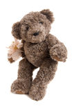 Teddy. Bear toy on white background Royalty Free Stock Photography