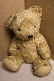 Teddy. An old and shabby teddy bear in a cardboard box corner Royalty Free Stock Photos