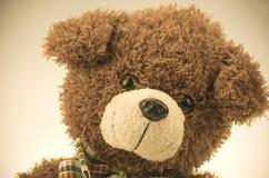 teddy Stock Foto