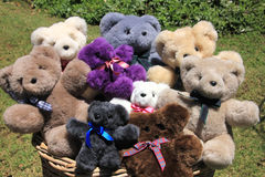 Teddy Basket. Many colorful teddies sitting in basket surounded by grass Royalty Free Stock Image
