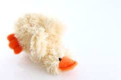 Teddy bear. Funny teddy bear in white background Royalty Free Stock Image