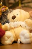 Teddy bear. Stuffed cream teddy bear toy with a brown nose and white paws Royalty Free Stock Photo