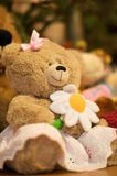 Teddy bear. Stuffed brown teddy bear toy in the skirt holding camomile in its paws Royalty Free Stock Photos