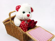 Teddy bear. With red valentine heart on red background with red rose on hand Royalty Free Stock Photography