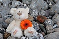 Teddy bear. A teddy bear gives a flower Royalty Free Stock Photography