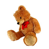 Teddy Bear. Isolated on white background Stock Image