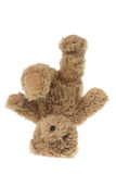 Teddy Bear. On White Background royalty free stock photo