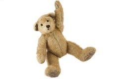 Teddy Bear Royaltyfri Fotografi