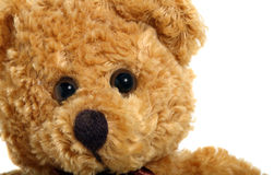 Teddy Bear Fotografia de Stock Royalty Free