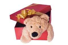 TEDDY BEAR. INSIDE A BOX Royalty Free Stock Photos