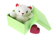 Teddy Bear. In Gift Box on White Background royalty free stock images