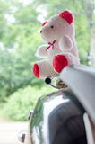 Teddy Bear Stock Foto