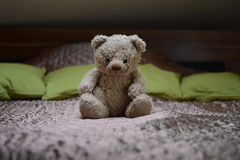 Teddy Bear Fotos de Stock