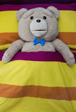 Teddy Bear Fotografia de Stock