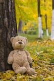 Teddy Bear Imagem de Stock