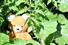 Teddy Bear Fotografia Stock Libera da Diritti