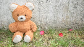 Teddy Bear Fotografie Stock
