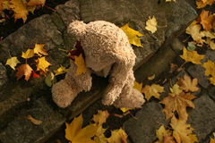 Teddy Bear in autumn Stock Photo