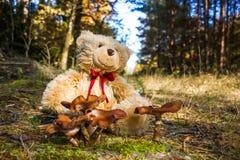 Teddy bear in autumn forest stock photo