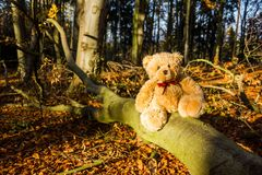Teddy bear. In autumn forest Royalty Free Stock Image
