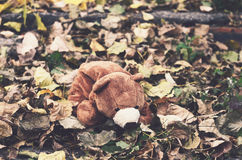 Teddy bear in autumn leaves Stock Image