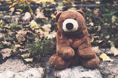Teddy bear in autumn wood Stock Photography